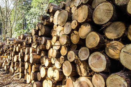 材木屋の目利き 画像